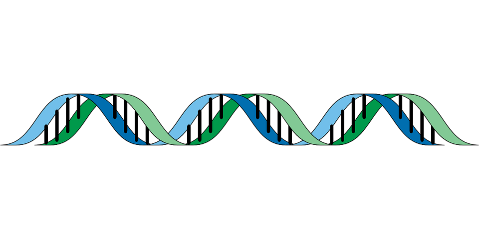 DNA Genetic Algorithm